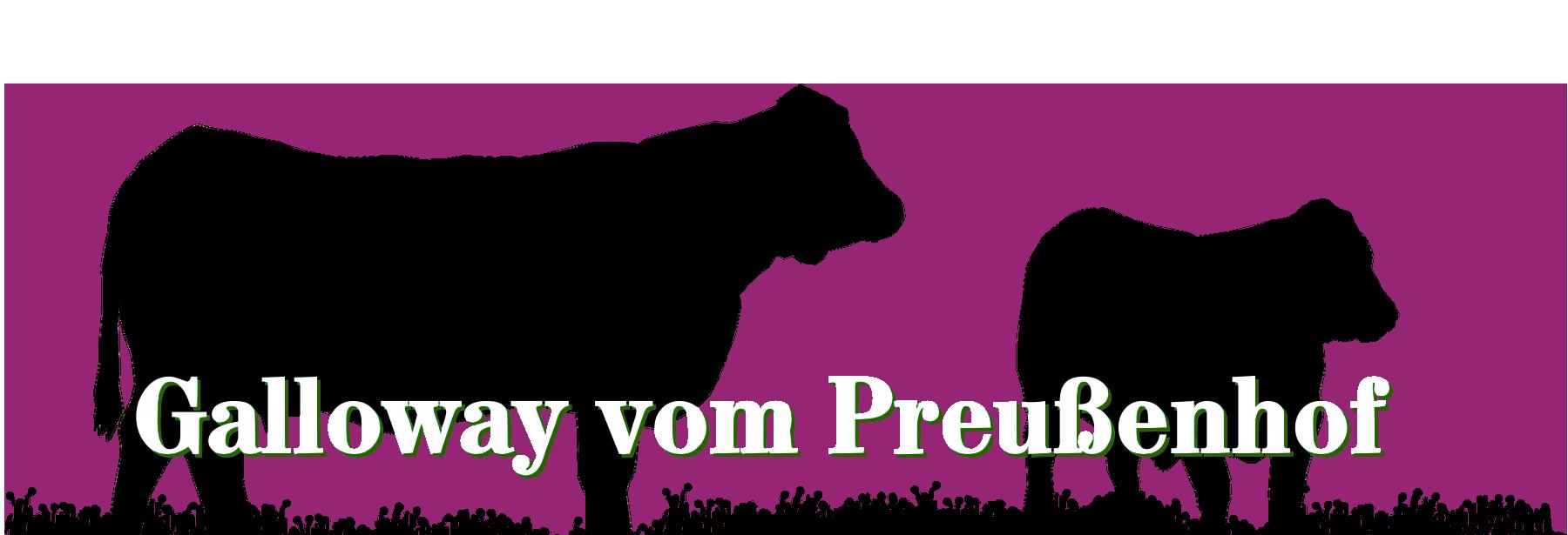 Galloway vom Preußenhof | 16909 Heiligengrabe